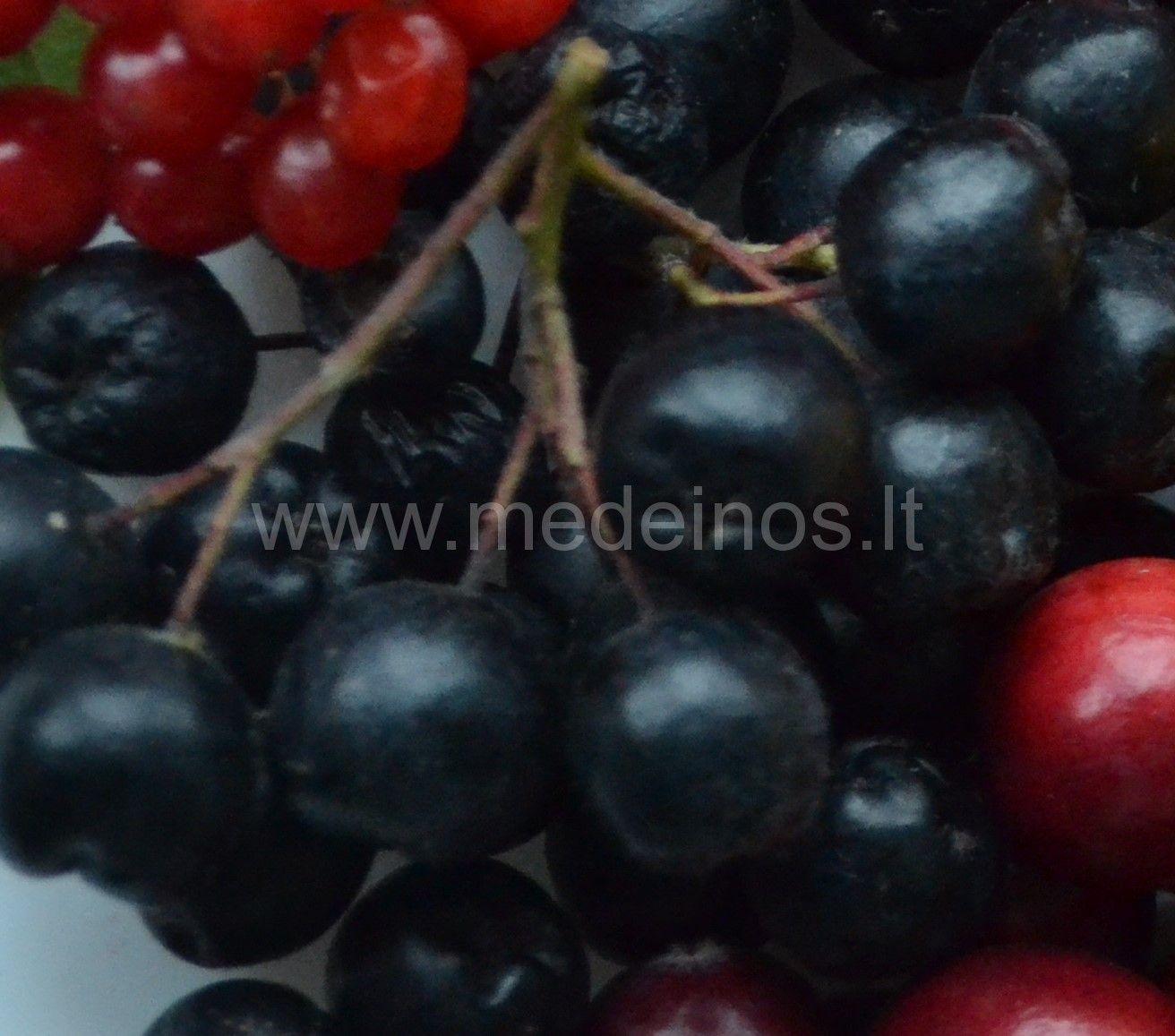 Juodavaisė aronija (Aronia melanocarpa)