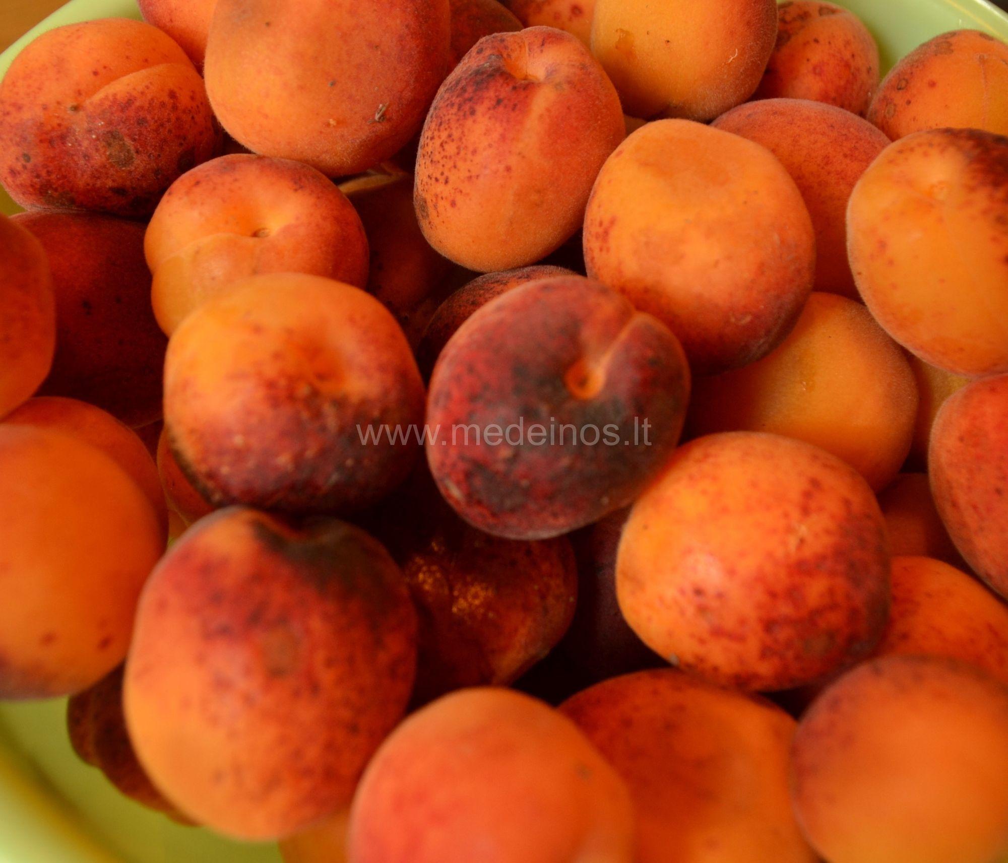 Paprastasis abrikosas (Prunus armeniaca)
