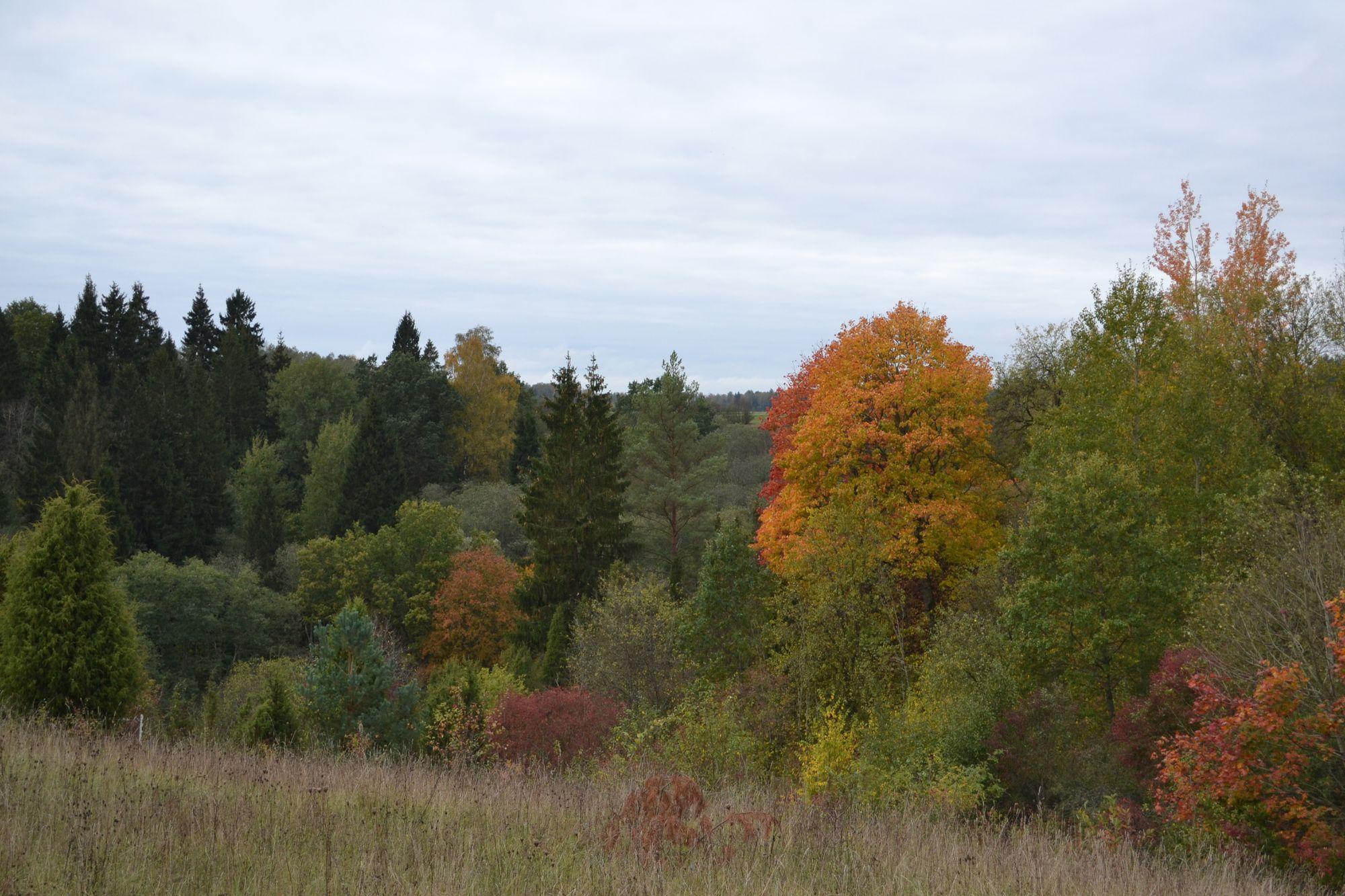 Margupio botaninis draustinis Jurbarko rajone