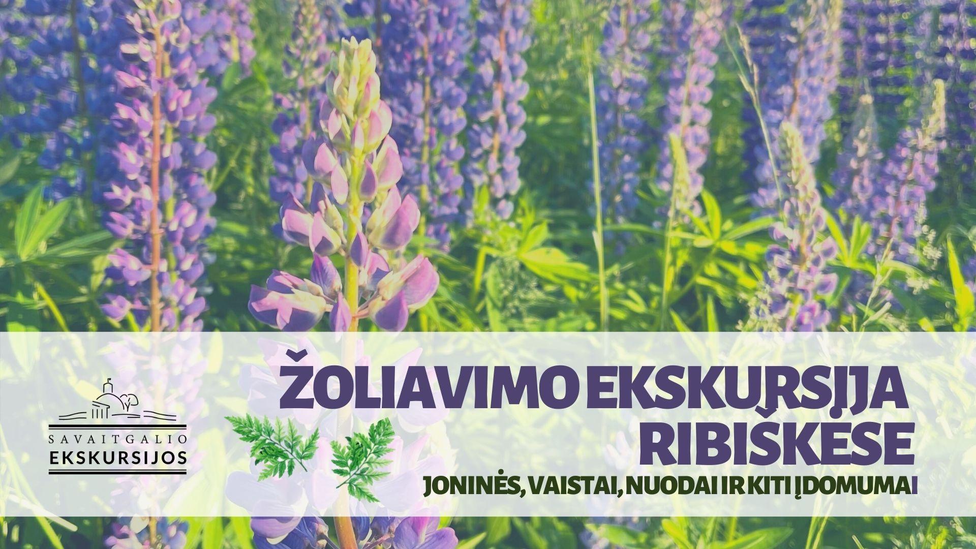 Žolynų ekskursija Ribiškėse: Joninės, vaistai, nuodai ir kiti įdomumai