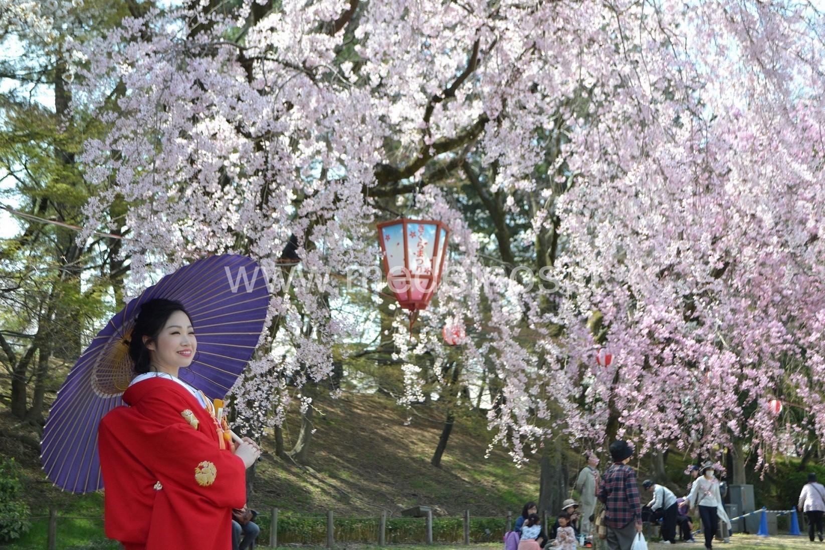Sakuros Japonijoje - būti čia ir dabar