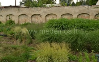 Vieną didžiausių dekoratyvinių siauralapių žolynų kolekciją galima pamatyti Vilniaus Botanikos sodo Vingio skyriuje