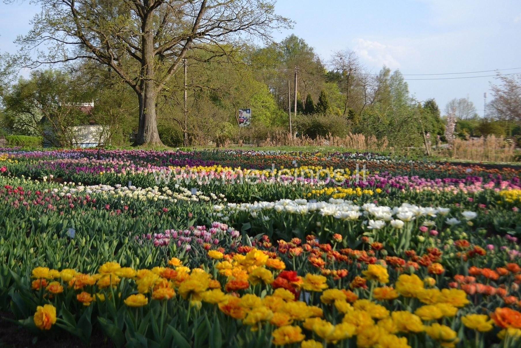 Pažintis su Kauno Botanikos sodu